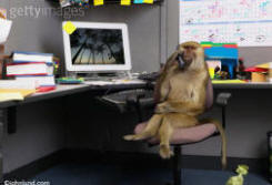 Picture of a monkey in an office on the phone conducting business