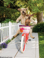 funny animal picture of dogs on a bike