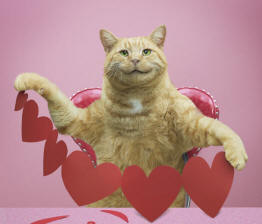 Funny animal antics stock photo of a tabby holding up some red valentine hearts he has cut out for you