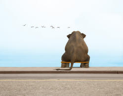 Picture of an elephant contemplating the ocean while sitting on a bench at the beach