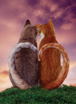 photo of cats with tails forming a heart shape - represents love