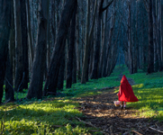 little red riding hood entering the forest - a stock photo of risk