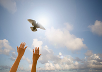 picture of hands reach to the sky after releasing a white dove