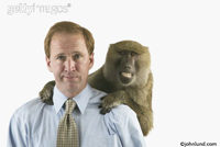 Picture of a man with a monkey on his back - a humor stock photo