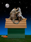 Picture of romantic dogs on the roof of a dog house watching the moon at night