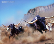 stock picture of stampeding cattle