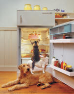 Funny photo of dogs and cats stealing cake from a refrigerator - Animal Antics Greeting Card Picture