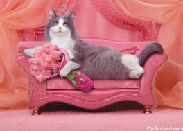 Adorable picture of a cat wearing a tiara with a boquet of roses laying on a pink sofa - Animal Antics Greeting Card Photo
