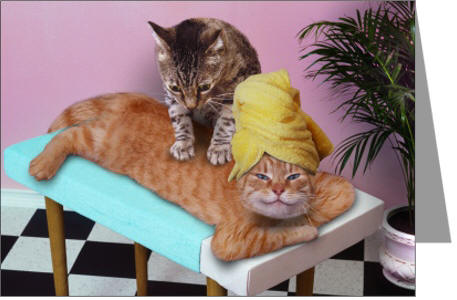 Massage Cats Image Created For Birthday And Greeting Cards Etc