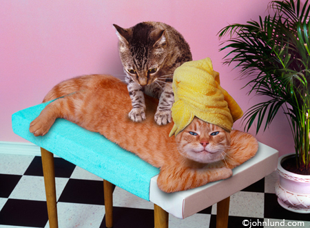 massage cats image used on custom printed merchandise such as coffee mugs, throw pillows, mousepads and more