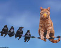 picture of cat disguised as bird on telephone wires
