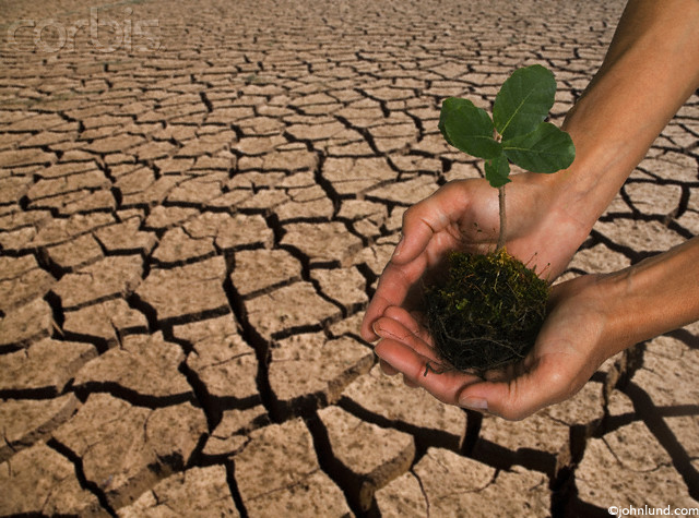 Picture of a pair of cupped hands holding a plant seedling over some dry cracked earth that looks like the water in a lake dried up leaving dry cracked mud.