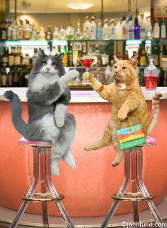 Bar Cats -  Silly picture of cats at a bar