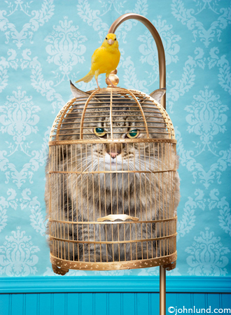 Picture of a Caged Cat
