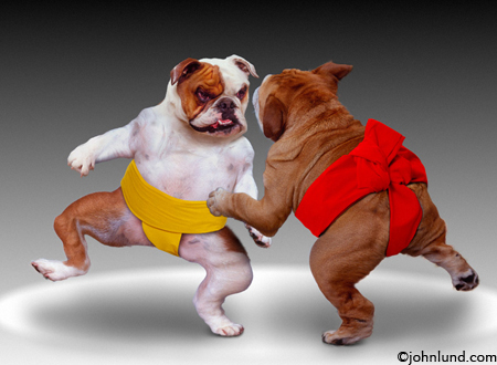 picture of sumo dogs
