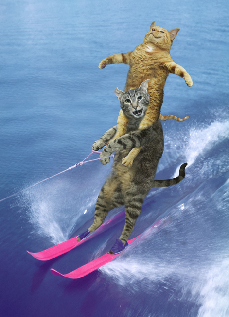 picture of water skiing cats