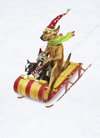 funny picture of animals riding a sliegh