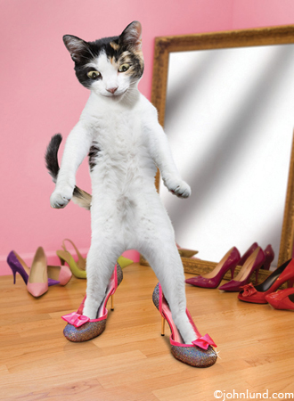 pciture of Sparkle Shoes -  a funny cat