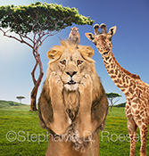 Three surprised African animals, a lion, a giraffe, and a monkey, stare at the viewer with expressions of shock in this humorous greeting card and stock photo.