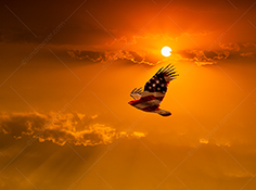 A patriotic American eagle in flight is a stock photo of an eagle in flight superimposed with an american flag against a beautiful sunset.