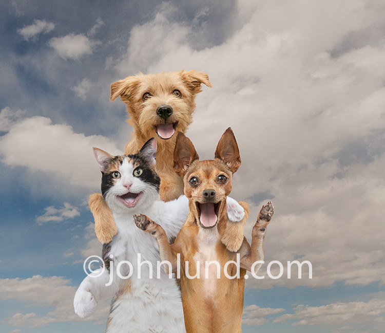 A cat and two dogs wear happy expressions of delight as they pal around together on a summer day.
