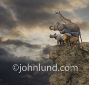 A Zebra, Giraffe, Lion, Rhinoceros and Elephant all stand at the edge of a cliff looking out towards the distance with storm clouds in the background.