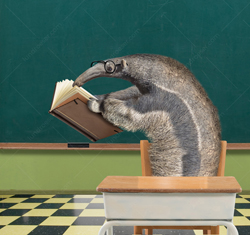 A funny anteater sits at a classroom desk with his nose in a book in a humorous greeting card image and stock photo.