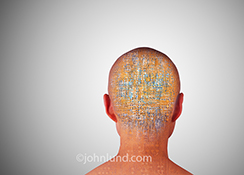 An artificially intelligent robot, seen from behind, has complex computer circuitry visible through its skin and skull in a stock photo about artificial intelligence and the future.