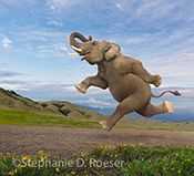 An athletic elephant jogs along a country trail in a funny elephant stock photo for use in advertising, promotional and greeting card offerings.