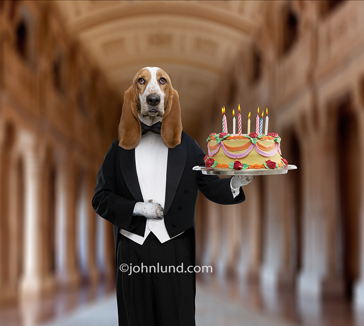 Funny greeting card basset hound butler picture bookmarktalkfo Gallery