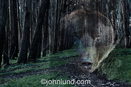 A bear's face is superimposed over a path through the woods in a stock photo about risk, danger and mystery.