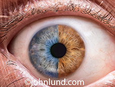 An eye, half blue and half brown, is seen close up in this stock photo about genetics, science, research and diversity.