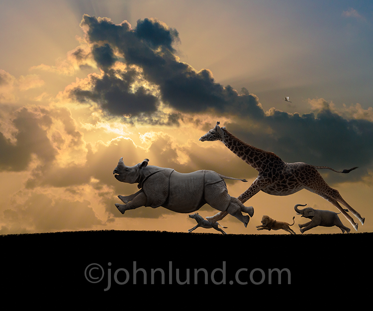 Not to be taken literally, this humorous animal exodus stock photo features a giraffe, rhino, zebra, lion and elephant galloping across a plain at sunset..oh yeah...and a distant egret accompanying them above the savannah.