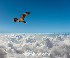A raptor, a bird of prey, flies high over a cloud bank in an image about the possibilities and opportunities in cloud computing for businesses and individuals with vision and motivation.