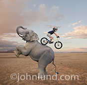 This funny elephant photo features a young boy riding a mountain bike down it's back. Both the elephant and the boy appear to be enjoying the experience!
