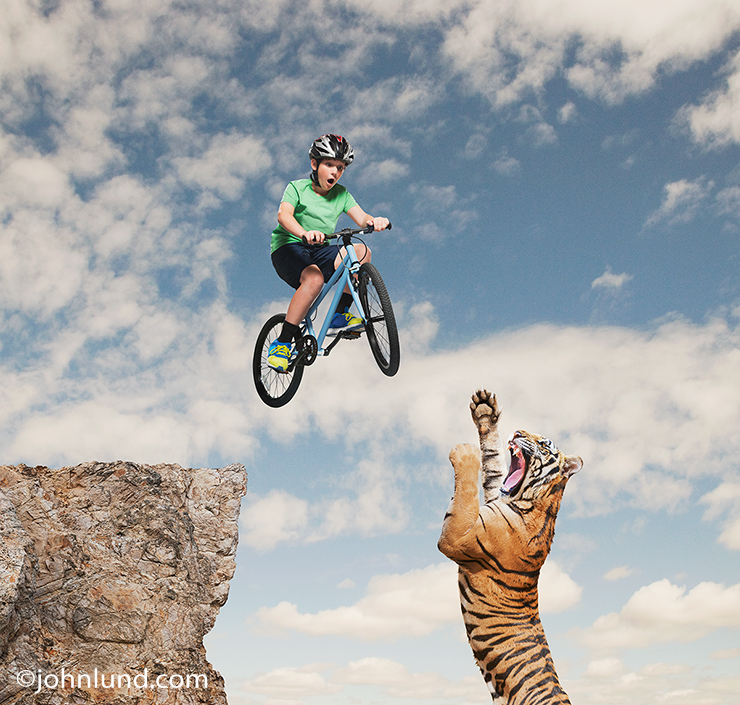 In this funny tiger picture a young boy jumps his mountain bike over a tiger in a humorous stock photo about the bizarre, the improbable, the fantastic, as well as risk and danger.