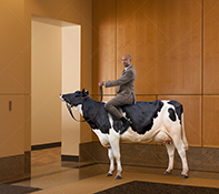 A businessman sits astride a sacred corporate cow in and upscale business lobby.