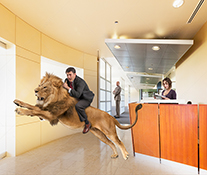 A businessman rides a leaping lion in a stock photo about new business, innovation, and business courage.