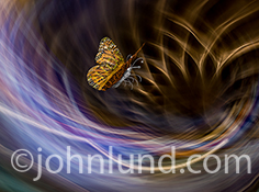 This future technology image features a butterfly with circuitry imprinted on its wings as it flutters above a colorful vertex of lights in a photo about the future, possibilities, and the way forward.