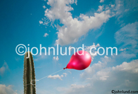 A red balloon is tied to a cactus in this concept stock photo about risk, danger, adversity, chance and even hope and endurance. Pictures of cactus and balloon against a blue cloudy sky. Symbolic pictures.