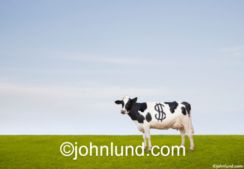 Funny picture of a cash cow. Picture of a Holstein cow standing in a green pasture with blue sky background with a big dollar sign among it's spots. Its a California Cash Cow Pic.