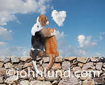 In this funny cat and dog friend photo, a Beagle sits on a rock wall with his arm around an orange tabby cat as they gaze at a heart shaped cloud in the sky.
