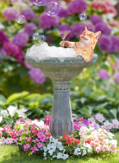 Funny picture of a cat in a bird bath with a martini in its paw relaxing in his version of a spa for felines.