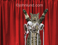 A cat stands, arms upraised, behind a set of microphones and in front of red velvet curtains in a humorous press conference stock photo.