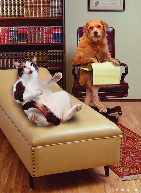 Stock photo and funny animal antics picture of a cat on a couch with a dog as a therapist taking notes. The Dog is psychoanalizing his cat patient.