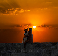 Cat love and kitty romance in a stock photo of two cats sitting together on a rock wall and watching a heart-shaped sun sink into the west.
