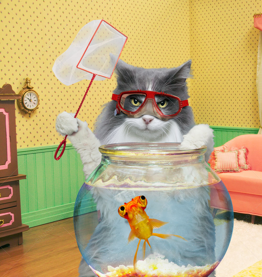 A cat catching a goldfish with a net and swim goggles for Fish video for cats