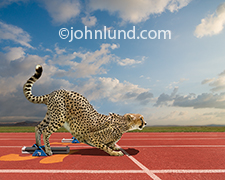 A Cheetah gets set in the starting blocks on a track in a humorous image illustrating the concept of speed in business and other applications.