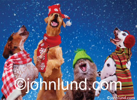 three dogs and a cat sing christmas carols as the snowflakes fall xmas in this funny picture and stock photo - Animals Singing Christmas Songs