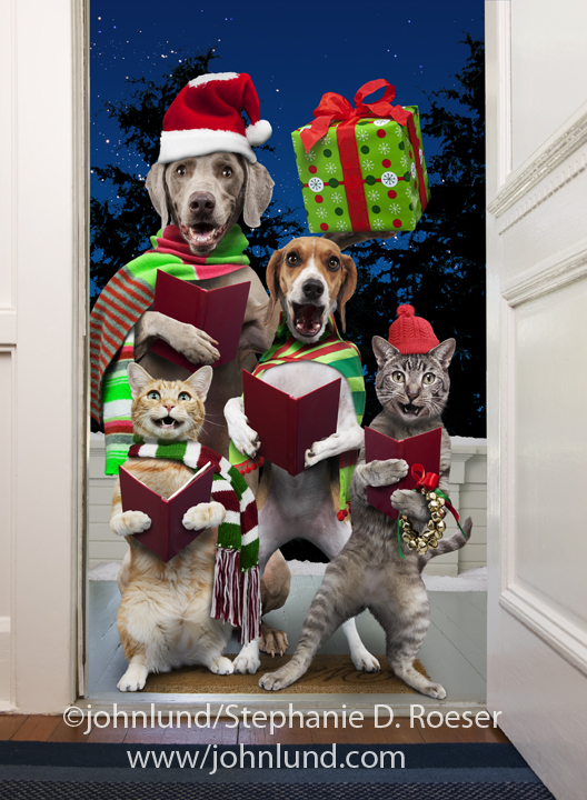 Dogs And Cats Singing Christmas Carols For A Greeting Card